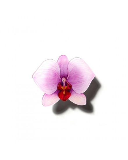 Orchid Pop Grip